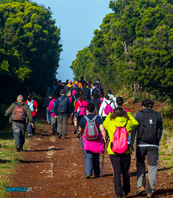 special packs for groups in sao jorge island - azores